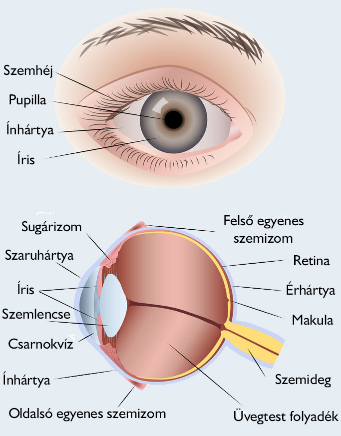 egyik szem gyengült látása