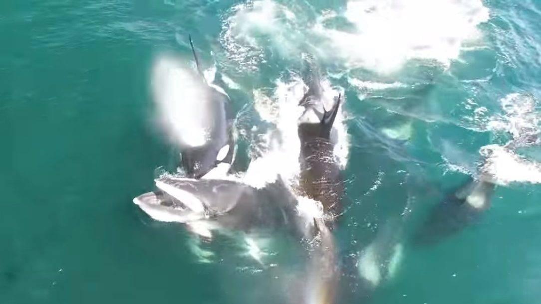 Tucatnyi delfin tetemére bukkantak Mauritius partjainál