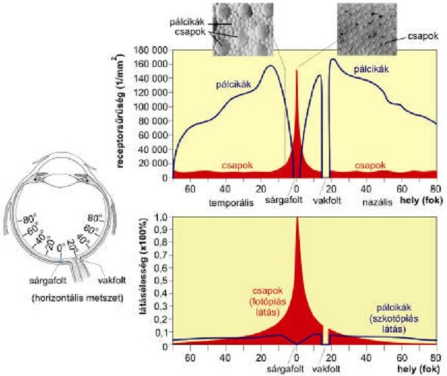 Noctolopia: hogyan lehet fejleszteni a sötétben való látás képességét