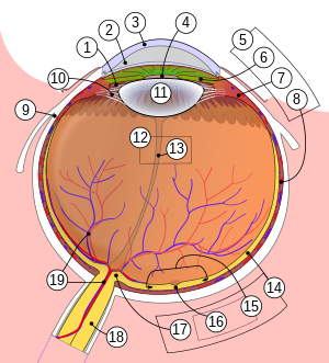 szem perifériás látás