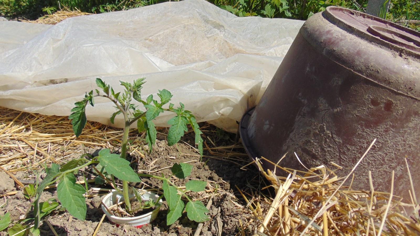 Kezdődhet a palánták ültetése, nevelése