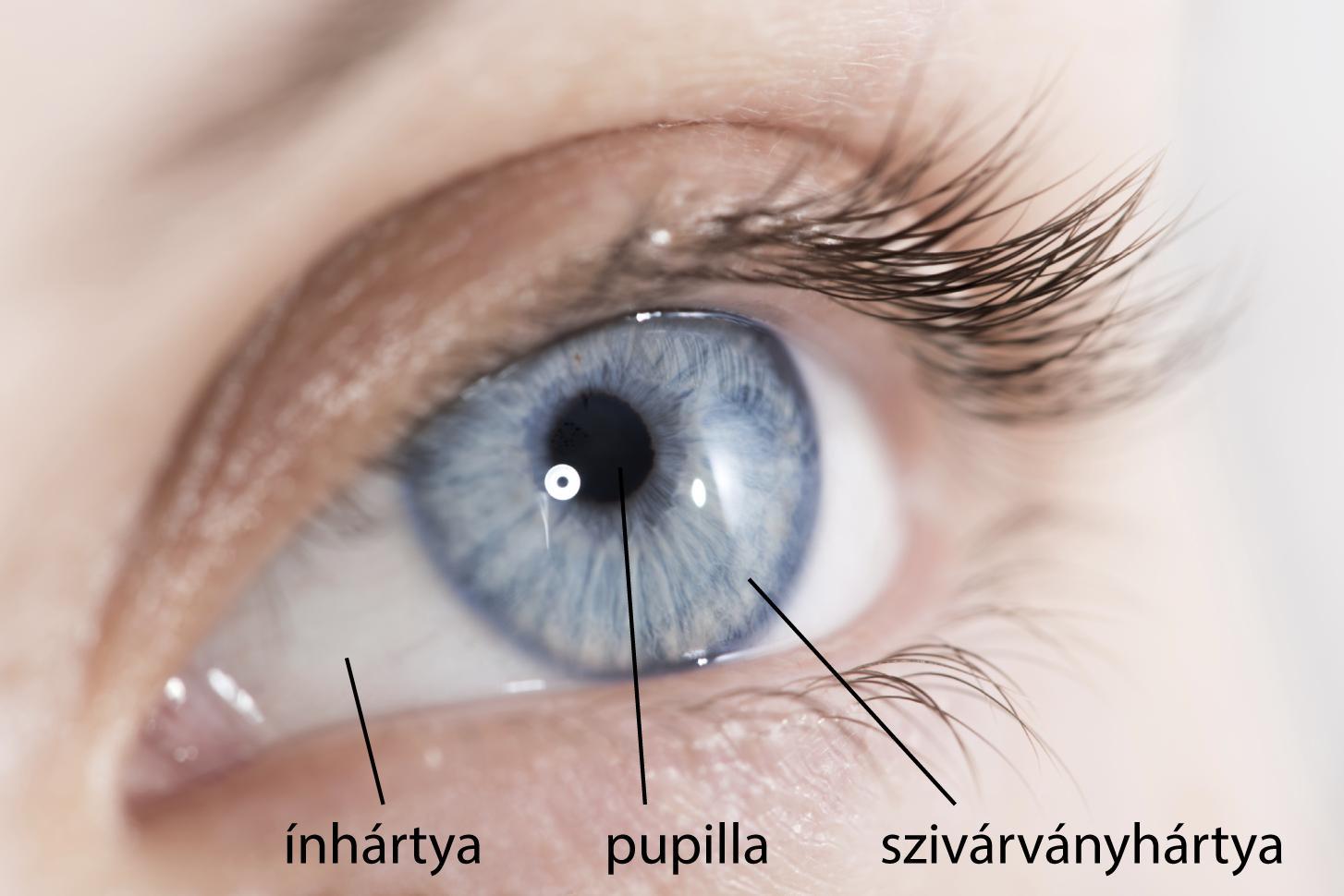 a szem különböző látását nevezik