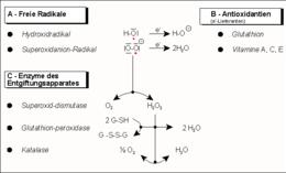 antioxidánsok látása)