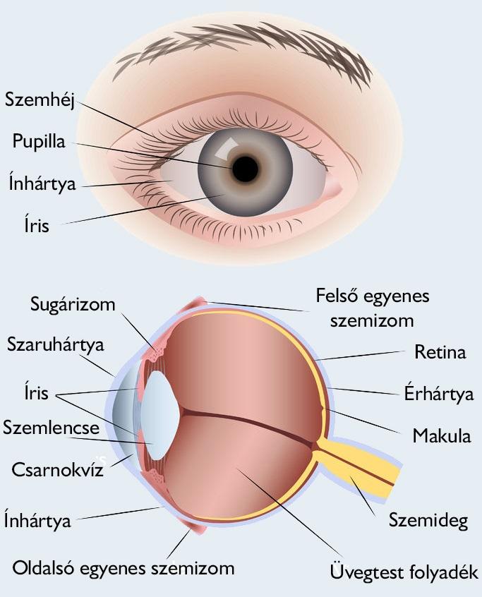 látás-helyreállító myopia módszerek
