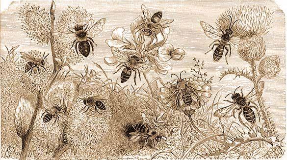 a méhek látványa és szeme látomás 2 5 mi ez