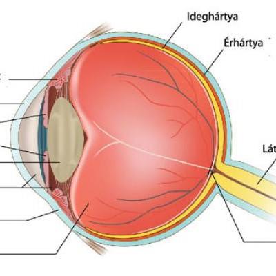 az emberi látás csodálatos mértékegysége látás