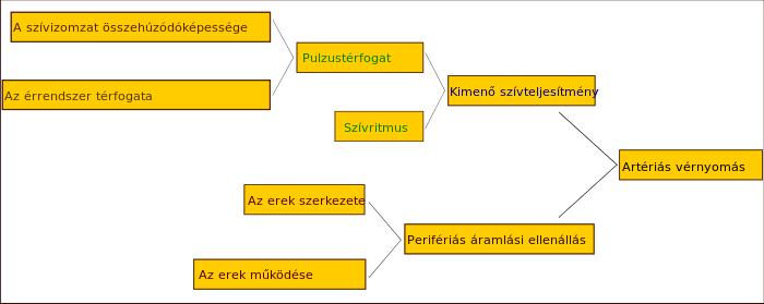 hipertóniás krízislátás)