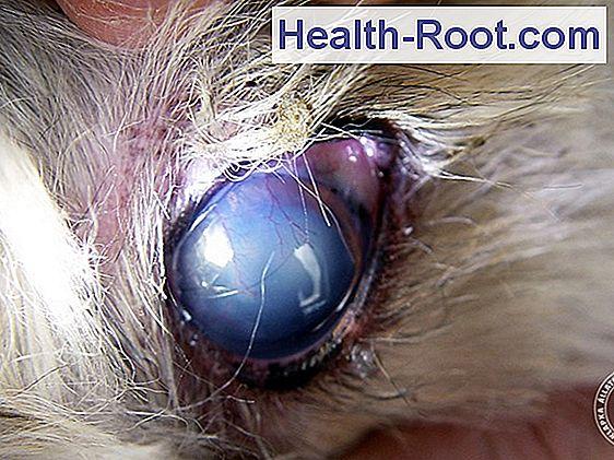 herpeszes keratitis látás helyreállítása