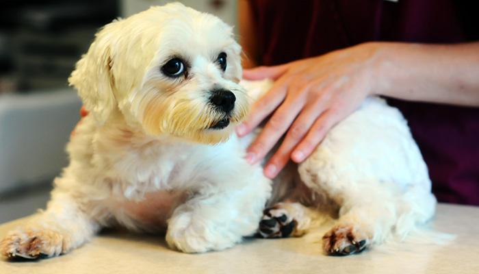 szemészi segítség állatorvosi klinikákon látásvizsgálat címe