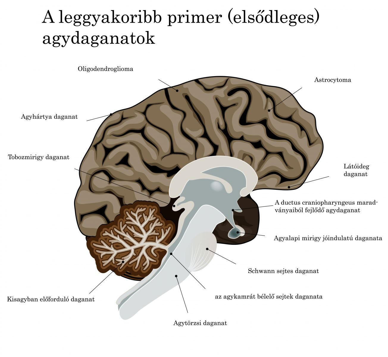 Dubynin agya és látása