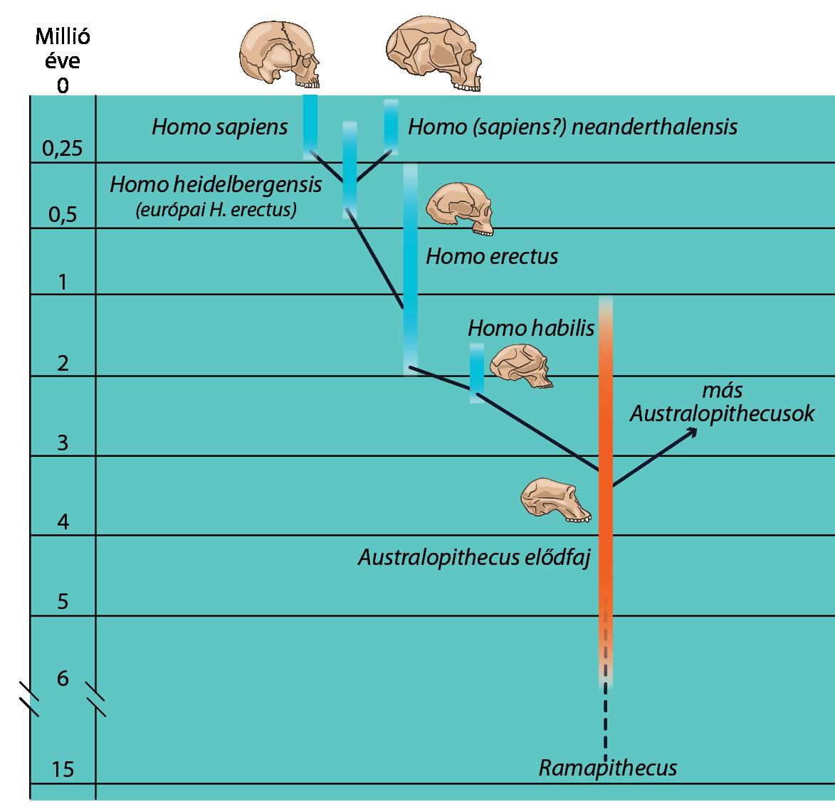 Fizika – Wikipédia