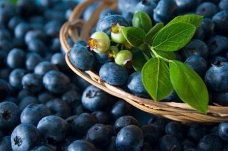 A blueberry-forte javítja a látást)