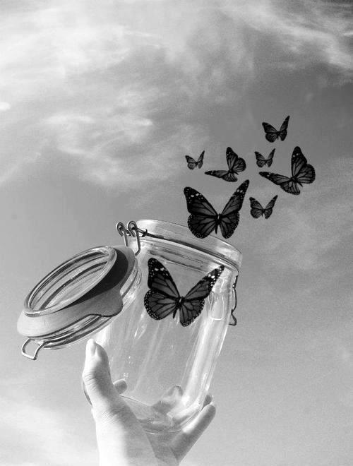 mi a pillangók látomása