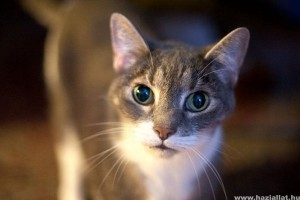 amikor a cica látást kap