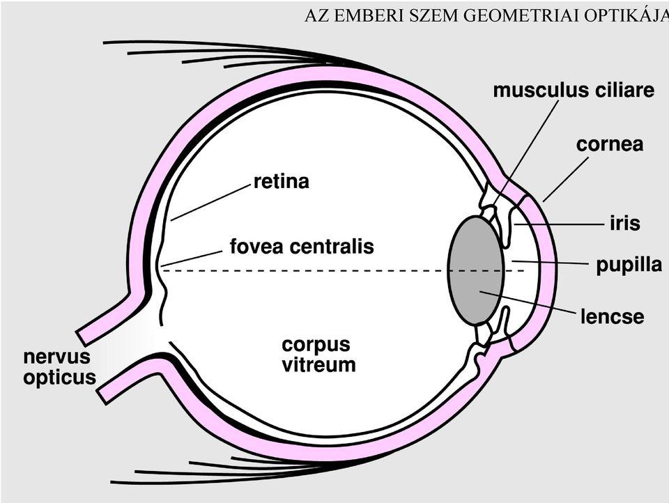 Mitol recseg a szem? - A szem betegségei