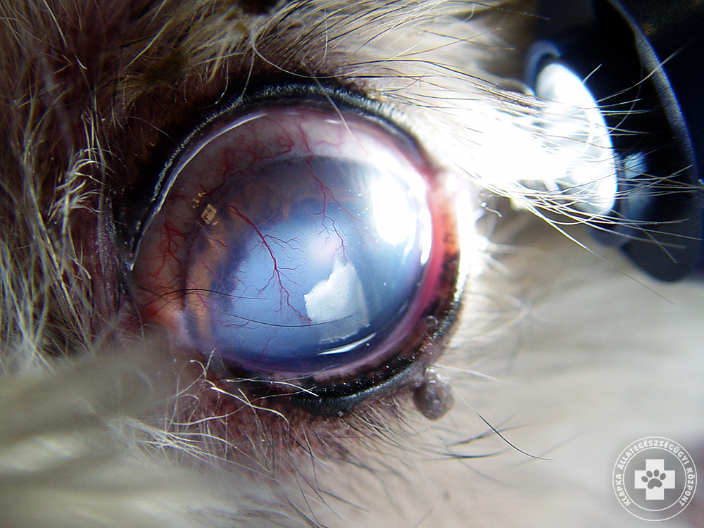A látás romlik az uveitisz után