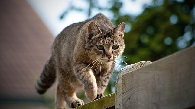 macska elveszíti látását