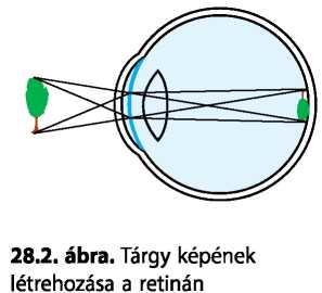 hogyan lehet növelni a látótávolságot