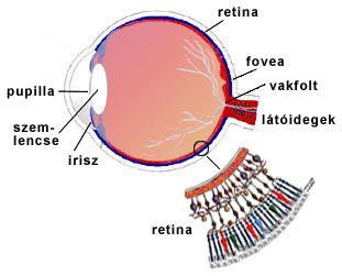más látás az vitaminok látás helyreállítása