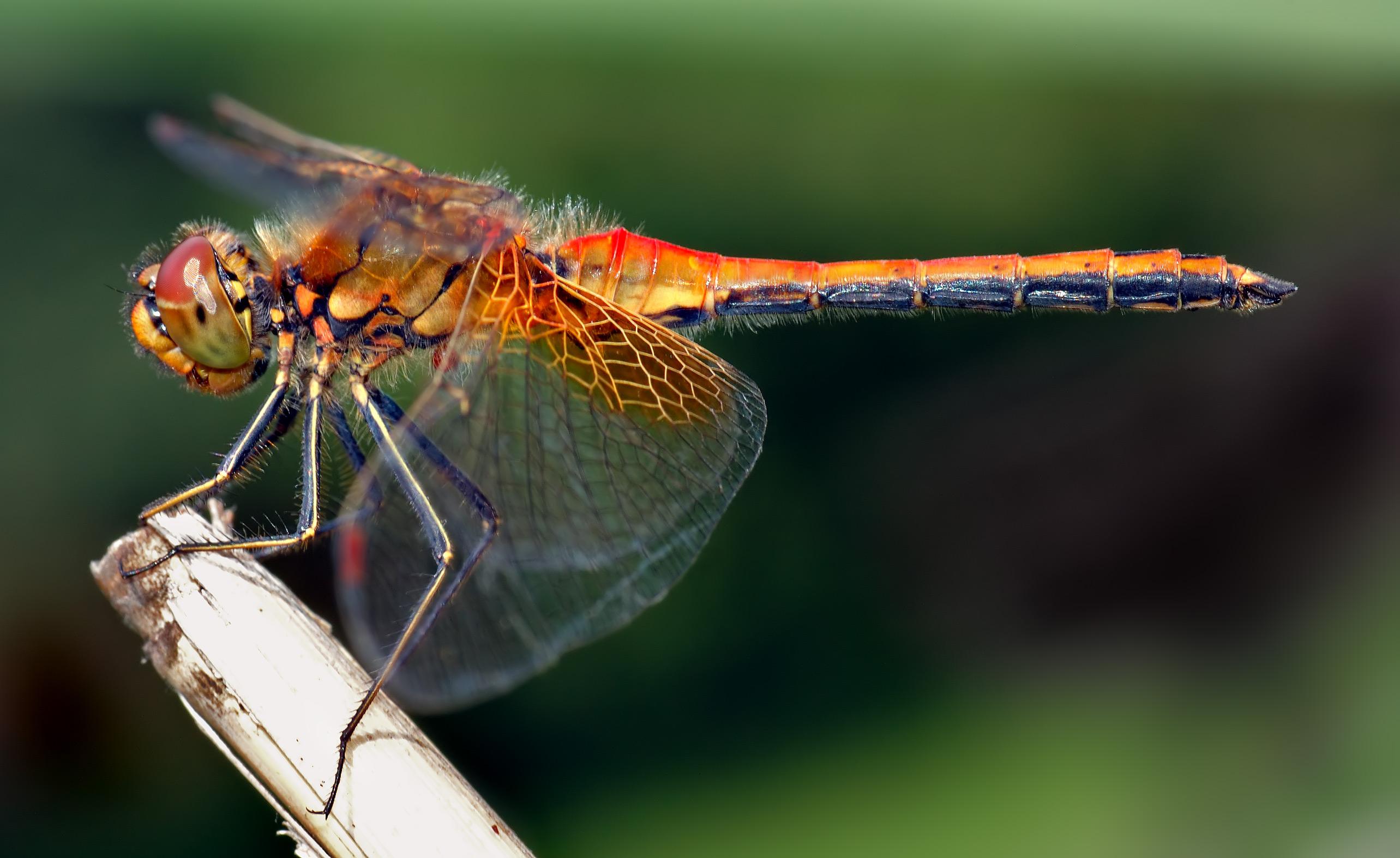 pillangók és szitakötők látása hyperopia 13 év