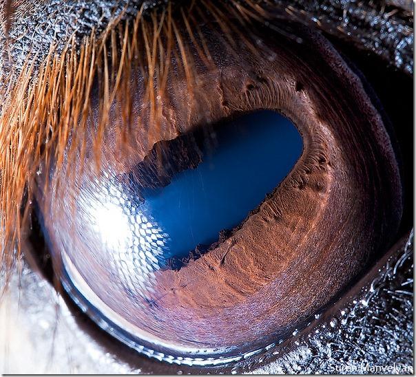 pupilla mérete és látása hogy a jód hogyan befolyásolja a látást
