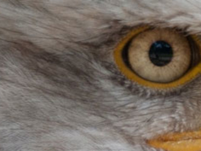 kiemelkedő látásvizsgálat