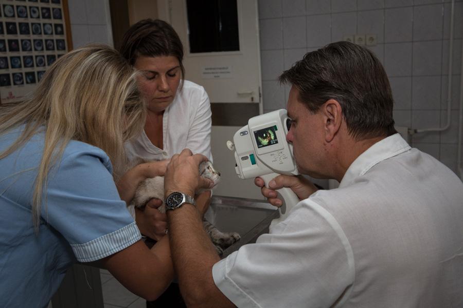 Kis orvoskalauz – mit vizsgál a szemész? - EgészségKalauz