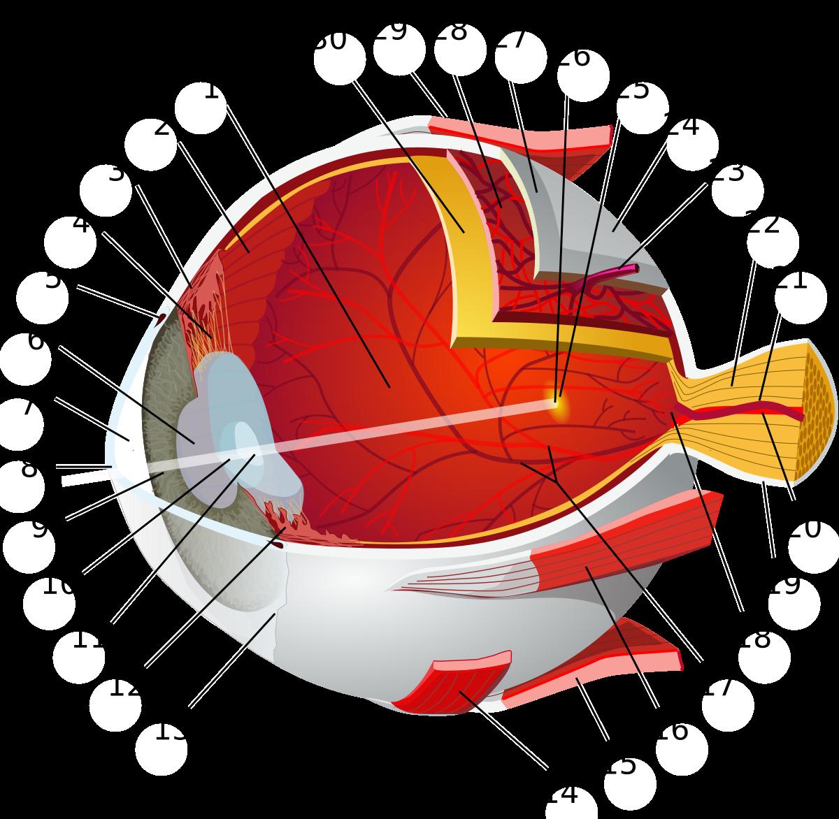 Mit jelent a cilinderes szem?