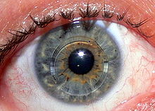 német szemészeti kezelés szaruhártya-átültetés mínusz milyen látás lesz az ember vak