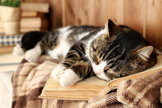 macska elveszíti látását jövőkép az emberi életben
