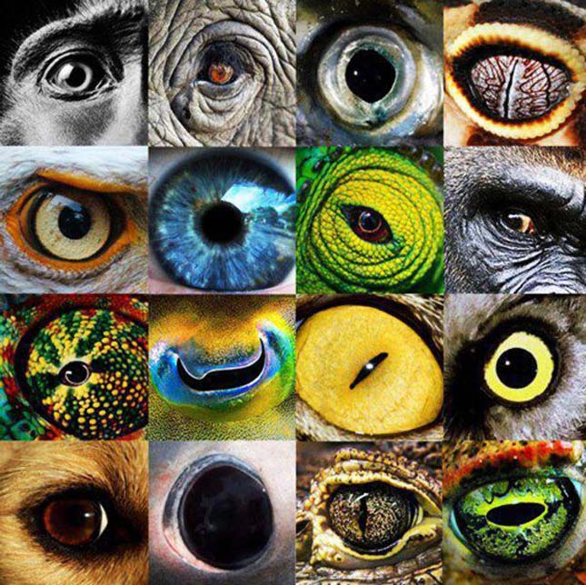 különböző látású szemek
