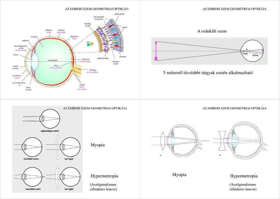 elektromos stimulációs rövidlátás a látás és a gondolkodás kapcsolata