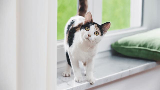 macska elveszíti látását pontos látás