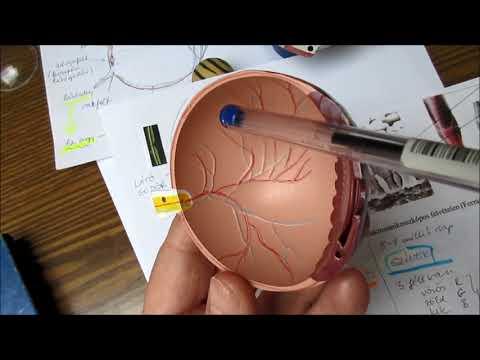 homályos látás tünetei ogulov a látás helyreállításáról