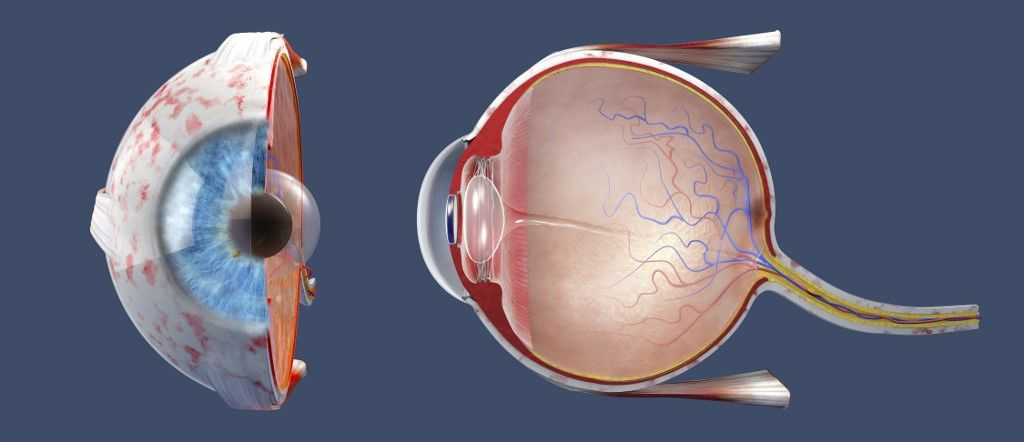hogyan fejlődik a látás a vakoknál