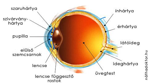 emberi látásvizsgálati diagram az asztal ellenőrzi a látását