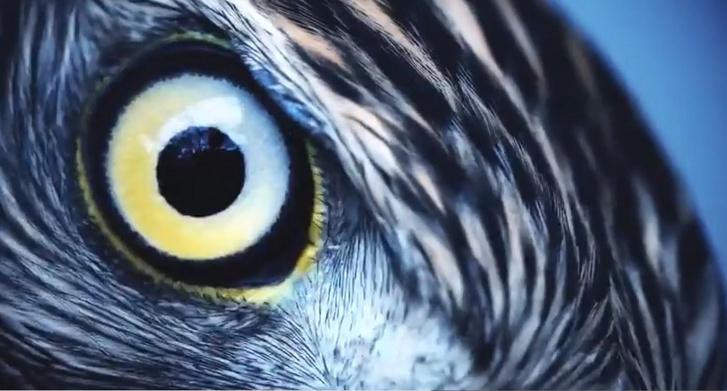 4. látás, ahogy az ember látja