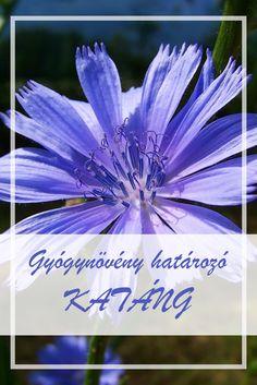 gyógynövények a látás javítása érdekében)
