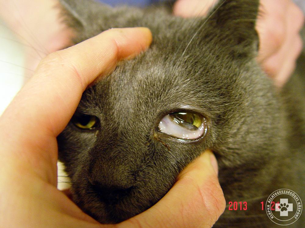 látás-helyreállító műtét következményei