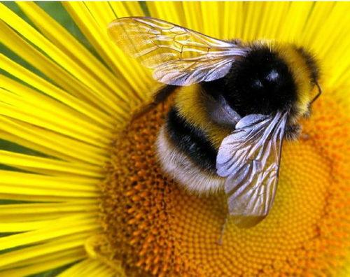 méh pollen látása