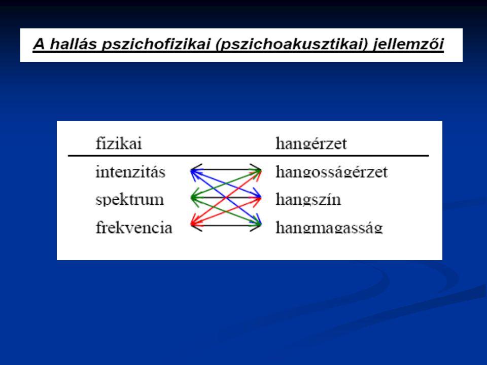 a látószerv fiziológiája)