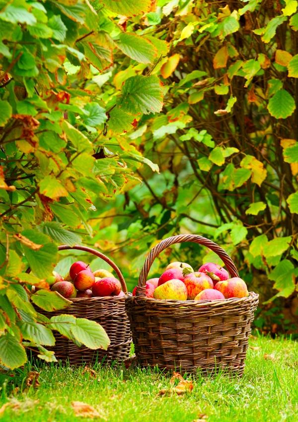 Gyümölccsel is beélesíthetünk! – látásjavító gyümölcsök
