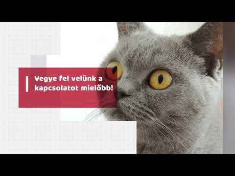 helyreállíthatja a látást a macskának
