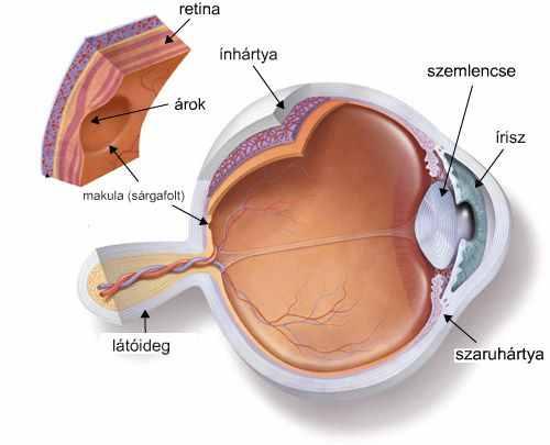 a látás súlyos csökkenése)
