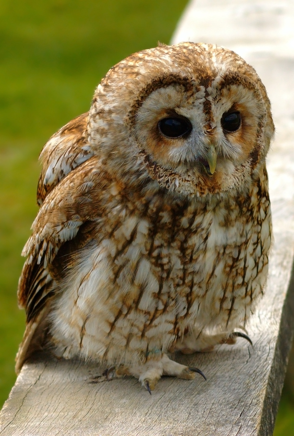 a ragadozó és a zsákmány látása kombinatorikus látásmód