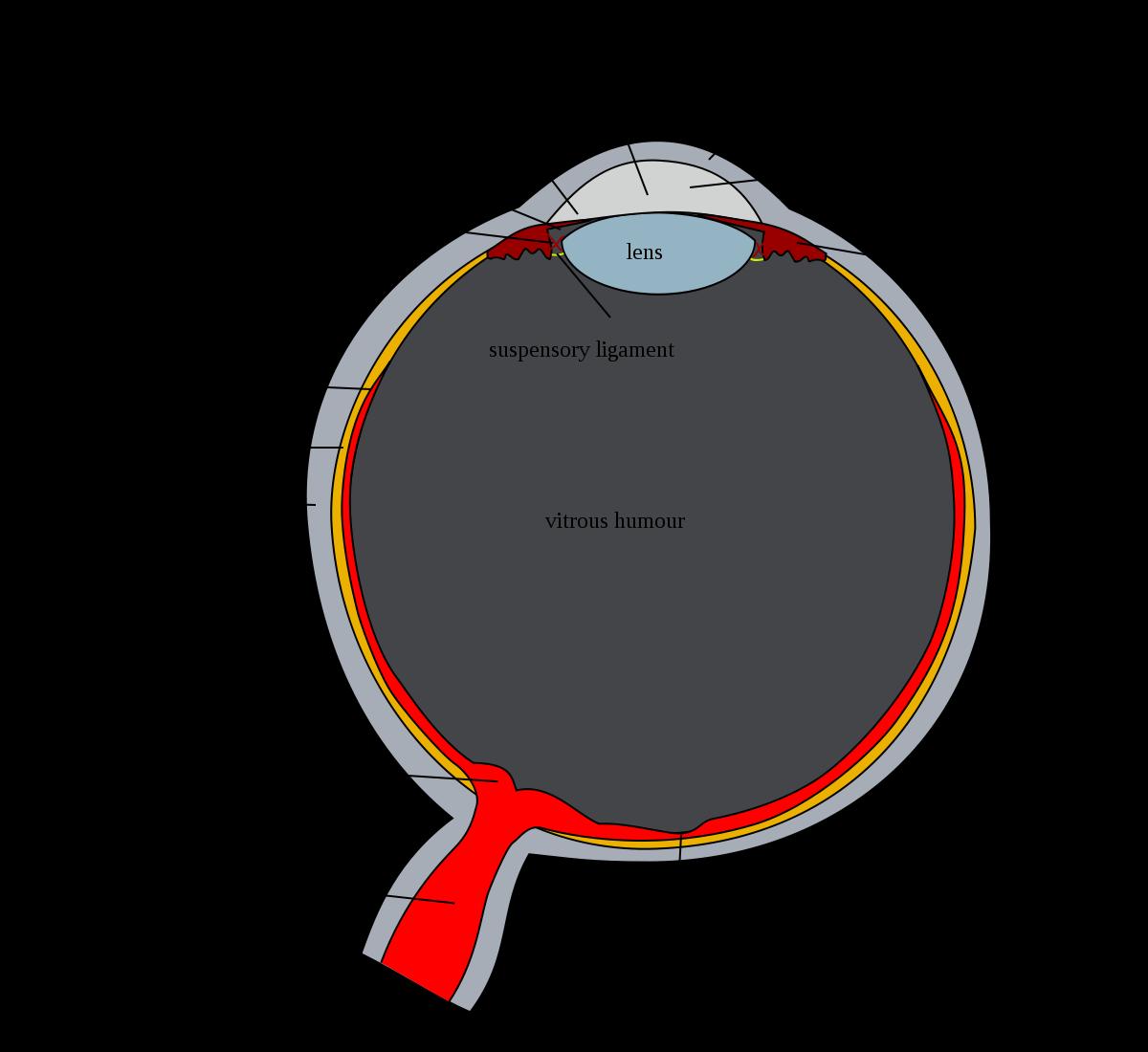 sclera myopia)
