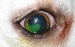 az egyik szem látása hirtelen esett