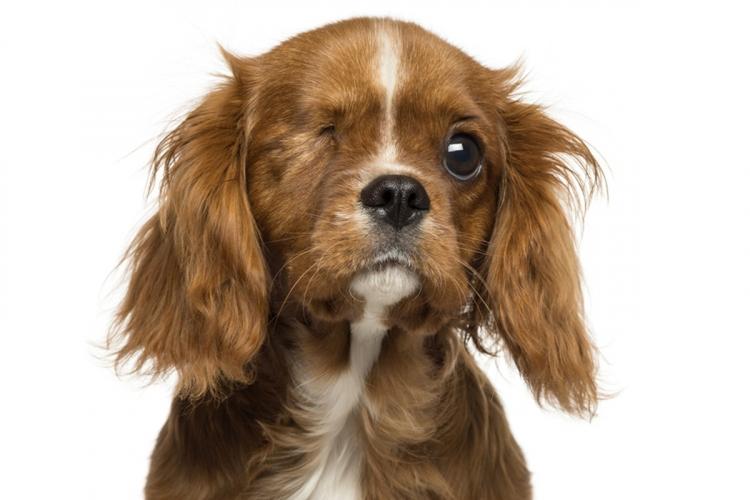 a legjobb látás egy kutyában