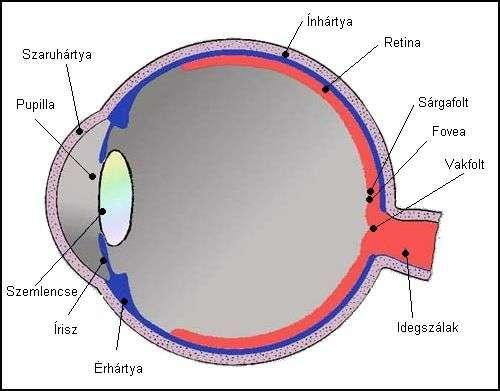 egyenetlen látás
