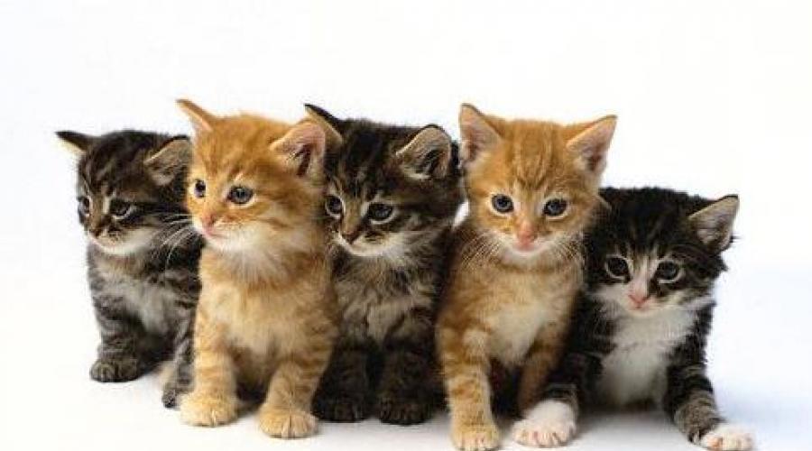 mi a macska látása)